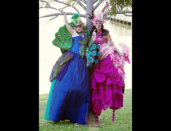 Stilt Walkers Peacock Duo - Perth Stilt Walkers